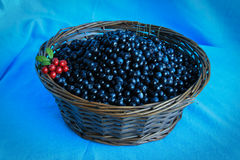Delicious ripe blueberries in a wooden basket stands on  table Stock Image