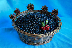 Delicious ripe blueberries in a wooden basket stands on table Stock Images