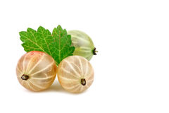 Delicious ripe gooseberries on a white background. Stock Images