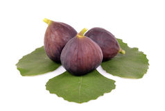 Delicious ripe green fig leaf Royalty Free Stock Photo