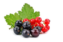 Delicious ripe red and black currant on a white background. Stock Images