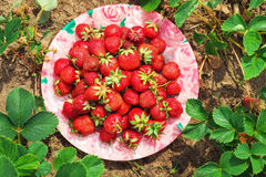 Delicious ripe strawberries on the plate Royalty Free Stock Photography