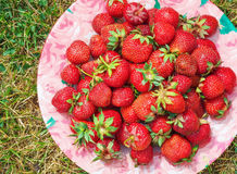 Delicious ripe strawberries on the plate Stock Photo