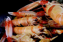 Delicious Roasted Langoustines Stock Photos