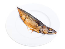 Delicious roasted mackerel fish. Stock Images
