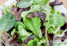 Delicious salad of different types of lettuce leaves Royalty Free Stock Images
