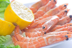 Delicious salad of fresh prawns Stock Images