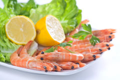 Delicious salad of fresh prawns Stock Photography