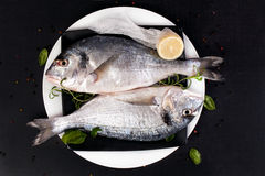 Delicious seafood. Royalty Free Stock Images