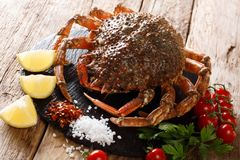 Delicious seafood: raw edible spider crab with ingredients for c. Ooking close-up on a wooden table. horizontal stock photo