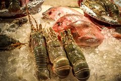 Delicious Set seafood on ice at restaurant in Royalty Free Stock Images