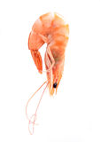 Delicious shrimp Stock Image