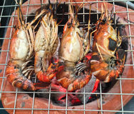 Delicious shrimp prawn spit on grill with flames Royalty Free Stock Photo