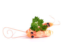 Delicious shrimps Royalty Free Stock Images