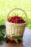 Delicious sour cherries Stock Images