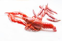 Spicy crayfish stock photography