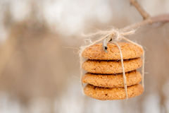 Delicious stacked oatmeal cookies on the tree Royalty Free Stock Photography