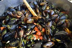 Delicious steamed fresh mussels royalty free stock photo