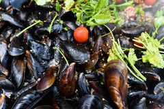 Delicious steamed fresh mussels Stock Photography