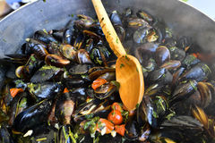 Delicious steamed fresh mussels Stock Images