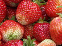 Delicious Strawberries. A handful of fresh strawberries Royalty Free Stock Image