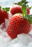 Delicious Strawberries. Fresh strawberries on crushed ice Royalty Free Stock Photo