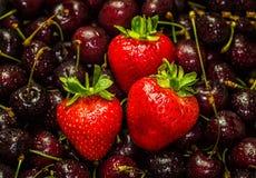 Delicious Strawberries and Cherries. Studio Shot Stock Image