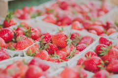 Delicious strawberries Royalty Free Stock Image
