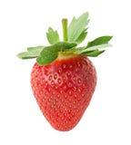 Delicious strawberry. Stock Image