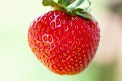 Delicious strawberry Stock Photo