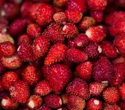 A delicious strawberry. Ripe berries. We collect strawberries. Berries stock photography