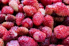 A delicious strawberry. Ripe berries. We collect strawberries. Berries royalty free stock photo