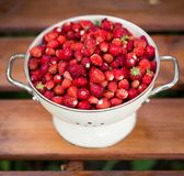 A delicious strawberry. Ripe berries. We collect strawberries. Berries stock photos