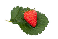 Delicious strawberry Stock Image