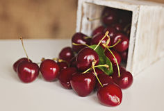 Delicious and sweet cherries Stock Photos