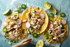Grilled Fish Tacos. Delicious tacos with grilled fish, cilantro, lime, cabbage, carrot, jalapeno and radish with mexican chili crema sauce royalty free stock photos