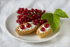 Delicious tartlets of fresh red currant with whipped cream Stock Photo