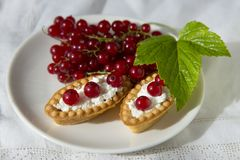 Delicious tartlets of fresh red currant with whipped cream Royalty Free Stock Photography