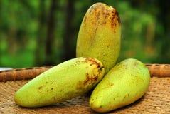 Delicious three ripe mangoes royalty free stock photo