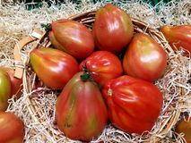 Delicious Tomatoes Royalty Free Stock Image