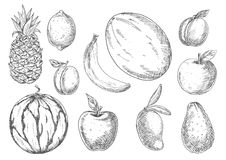 Delicious tropical and local fruits sketch icons Royalty Free Stock Photo