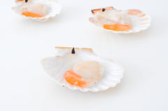 Delicious uncooked scallops on a white background Royalty Free Stock Images