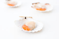 Delicious uncooked scallops on a white background Stock Image