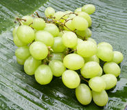Delicious wet grapes on a banana leaf. Fresh delicious wet grapes on a banana leaf Royalty Free Stock Photography