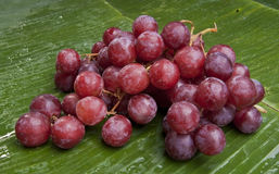 Delicious wet grapes on a banana leaf Royalty Free Stock Image