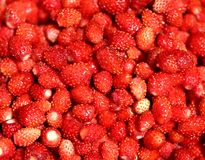 Delicious wild berry strawberry Royalty Free Stock Photos