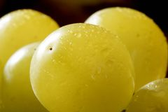 Delicious yellow autumn grape fruit Royalty Free Stock Photos