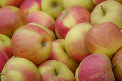 delicious, yellow red apples Stock Photography