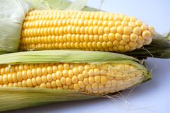 Delicious yellow summer corn on the cob Royalty Free Stock Photos