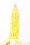 Deliciouse öra av majs på majskolvkärnor eller korn av mogen havre på vita den isolerade bakgrundsgrönsaken Royaltyfria Bilder